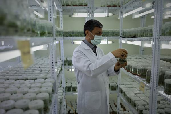 فراوری مدرن نهال های لیبل آبی برای نخستین بار در ایران به وسیله بنیاد مستضعفان